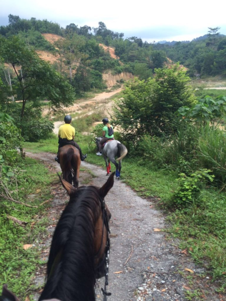 A view from Suki on her horse on our way back.