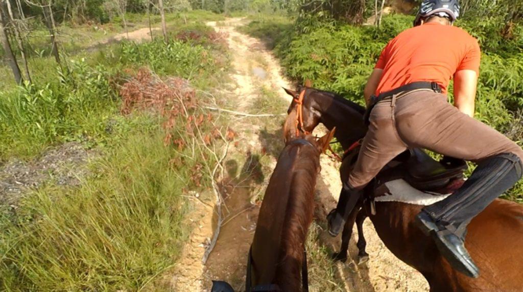Boy gets back on horse