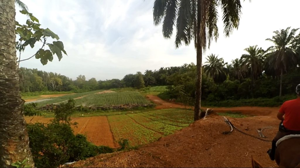 Inside vegetable farm