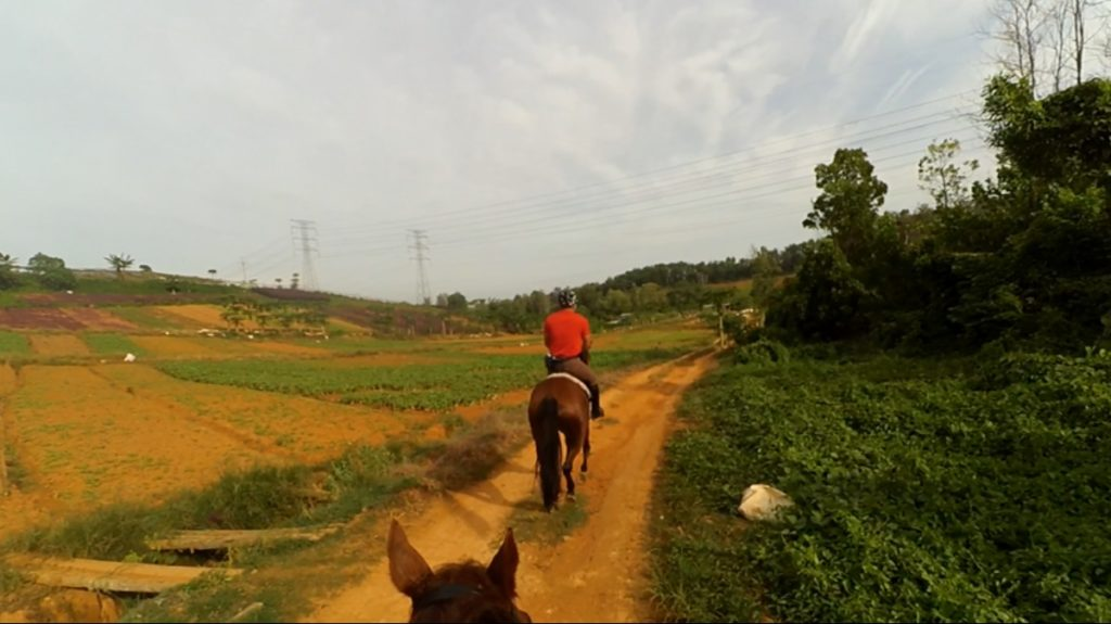 Slow canter pass vegetable farm