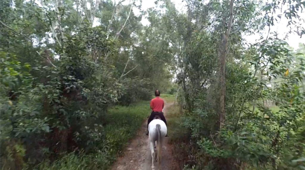 start-trotting
