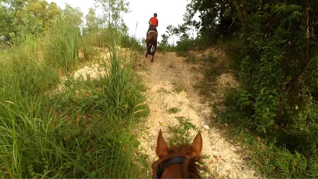 Canter up steep uphill