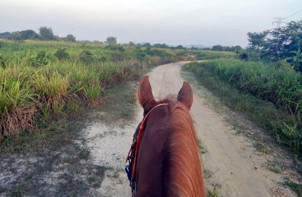 Cyberjaya Trail Ride - 3S Equestrian Centre