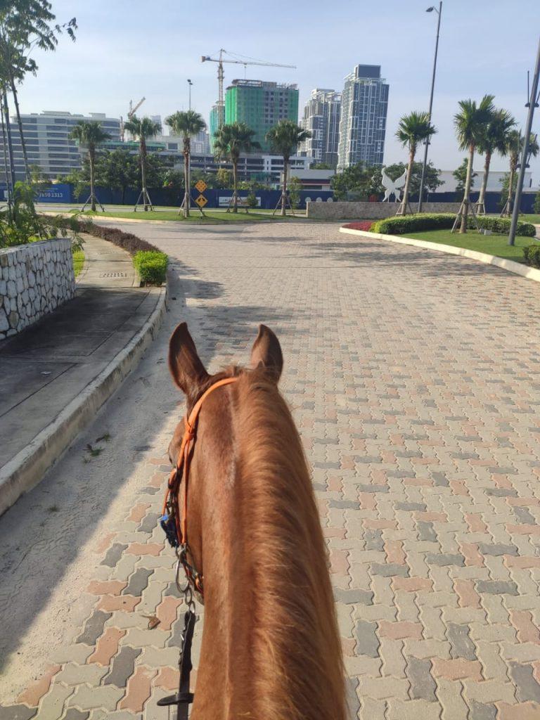 Cyberjaya street - 3S Equestrian Centre