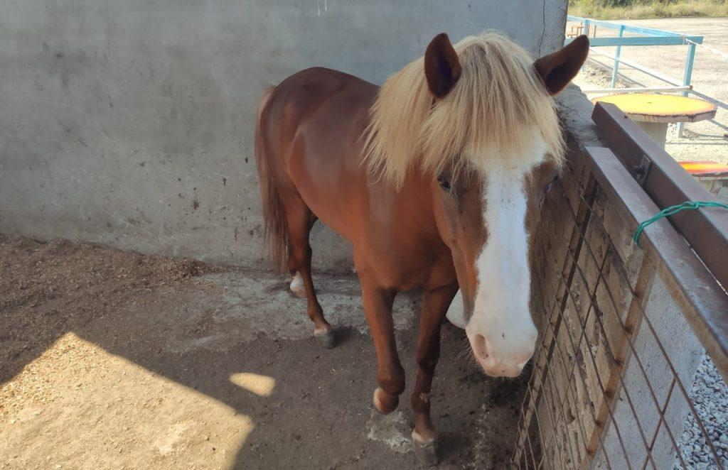 Cyberjaya Pony